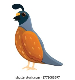 Quail animal icon. Cartoon of quail animal vector icon for web design isolated on white background