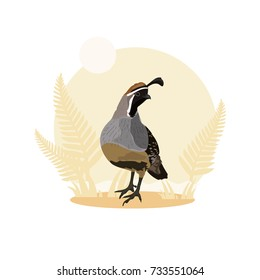 Quail bird vector illustration with nature background
