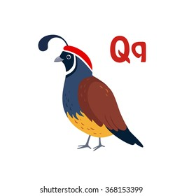 Quail. Funny Alphabet, Colourful Animal Vector Illustration