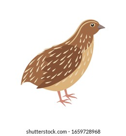 quail on the side. Isolated vector illustration