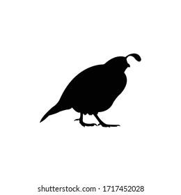 Quail Silhouette, Animal Vector Illustration.