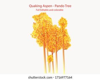 Quaking aspen Pando tree Flat vector Icon illustration full editable