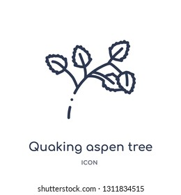 quaking aspen tree icon from nature outline collection. Thin line quaking aspen tree icon isolated on white background.