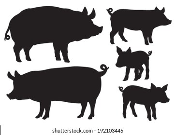 Quality black and white vector silhouettes of pigs