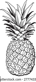 Quality pen and ink drawing of a pineapple. Black and white vector Illustration.