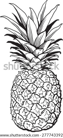 quality pen ink drawing pineapple black stock vector royalty free