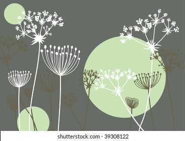 Queen Anne's Lace on a grey background
