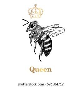 Queen bee. hand drawn vector illustration