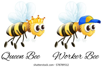 Queen bee and worker bee characters illustration
