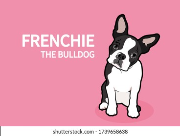 Question face Frenchie The Bulldog in pink background. Black & white breed french bulldog expresses his mood doing a head rotation.