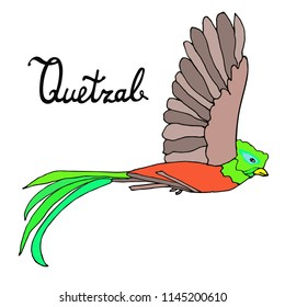 Quetzal Bird flying with quetzal word. Vector illustration.