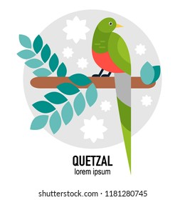 Quetzal bird vector flat illustration with leaves