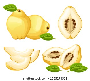 Quince with leaves whole and slices of quinces. Vector illustration of quince. Vector illustration for decorative poster, emblem natural product, farmers market. Website page and mobile app design