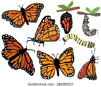 Quirky Hand drawn Monarch Butterflies and Caterpillar Stages