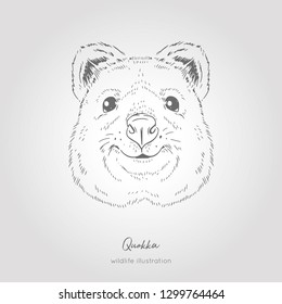 Quokka Australian animal. Realistic Symmetrical Head Vector sketch illustration.