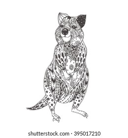 Quokka with ethnic floral doodle pattern. Coloring page  for adults - zendala, design for spiritual relaxation, vector illustration, isolated on a white background. Zen doodles.