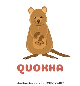 Quokka flashcard. Australian animal. Vector illustration for kids education and child reading skills development. Sight Words Flash Cards For children to learn read and spell.