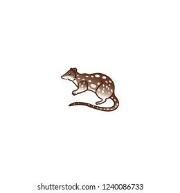 quoll vector flat icon