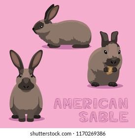 Rabbit American Sable Cartoon Vector Illustration