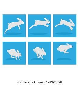 Rabbit animation