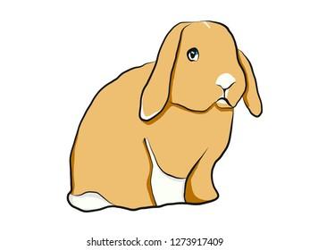 Rabbit hand drawing