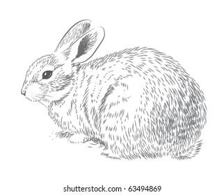 Rabbit hand drawn