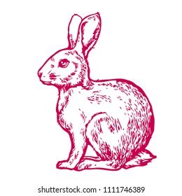 Rabbit, hare, cute little bunny hand drawn line art ink sketch stock vector illustration isolated on white background design for coloring book page