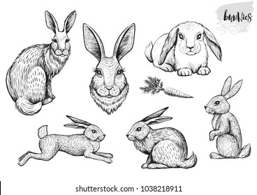 Rabbit and hare hand drawn vector illustrations. Running, sitting bunnies and engraving portrait of bunny. Easter line drawing.