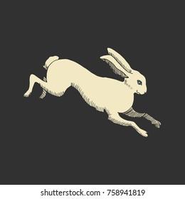 Rabbit or hare running hand drawn vector illustration
