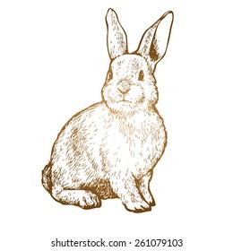 rabbit ink sketch vector illustration