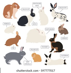 New Zealand White Rabbits Stock Illustrations Images