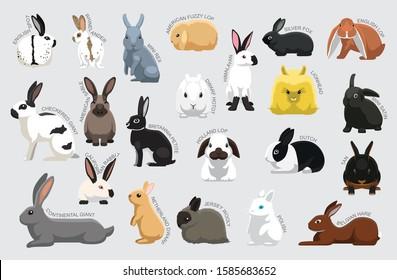 Rabbit Set Various Kind Identify Cartoon Vector