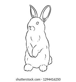 Rabbit sketch. Hand drawn cute rabbit doodle