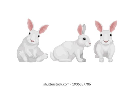 Rabbit as Small Mammal with White Coat in Different Poses Vector Set