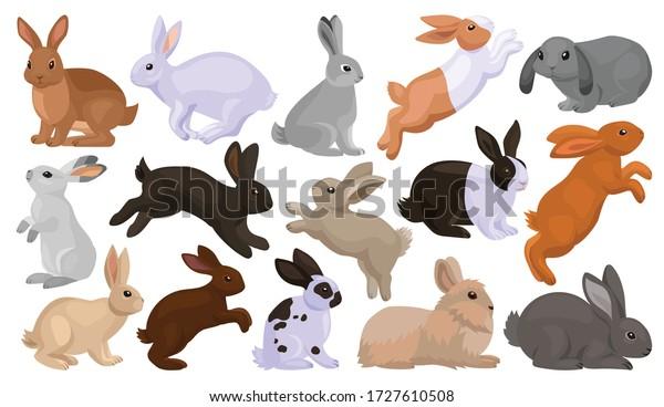 Rabbit vector cartoon set icon. Isolated cartoon set icon animal.Vector illustration rabbit on white background.