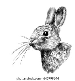 the rabbit-head in profile, sketch vector graphics black and white drawing