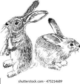 rabbits. black and white drawing