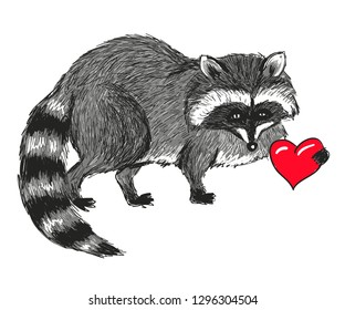 Raccon and heart. Vector sketch illustration,