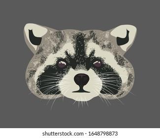 Raccoon head over a background. Raccoon dog realistic portrait. Furry raccoon face looking straight.