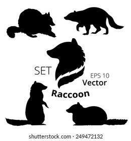 Raccoon set of silhouettes, vector