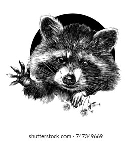 raccoon sketch vector graphics front side is black-and-white monochrome pattern