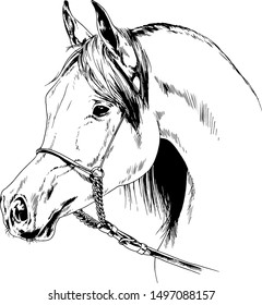 race horse without a harness drawn in ink by hand on white background in full length