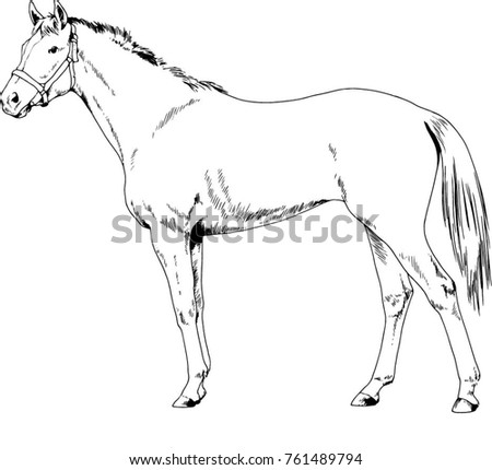 Race Horse Without Harness Drawn Ink Stock Vector Royalty Free