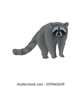 Racoon wild northern forest animal vector Illustration on a white background