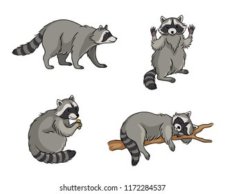Racoons - vector illustration. EPS8