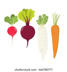 radish, carrot, beet root and daikon vector