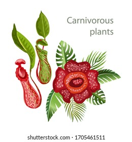 Rafflesia - biggest flower, Nepenthes plant. Red big flower, carnivorous plant. Tropical plant of Malaysia and Indonesia. Insect trap. Exotic floral set. Vector illustration.
