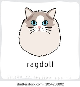 Ragdoll : Cat Breed Collection : Vector Illustration