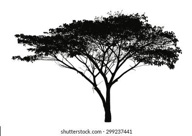 Rain tree silhouette : vector