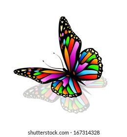 Rainbow Butterfly isolated with reflection. Vector